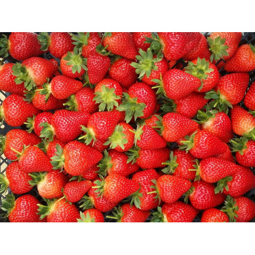 Strawberry Malling TM Centenary